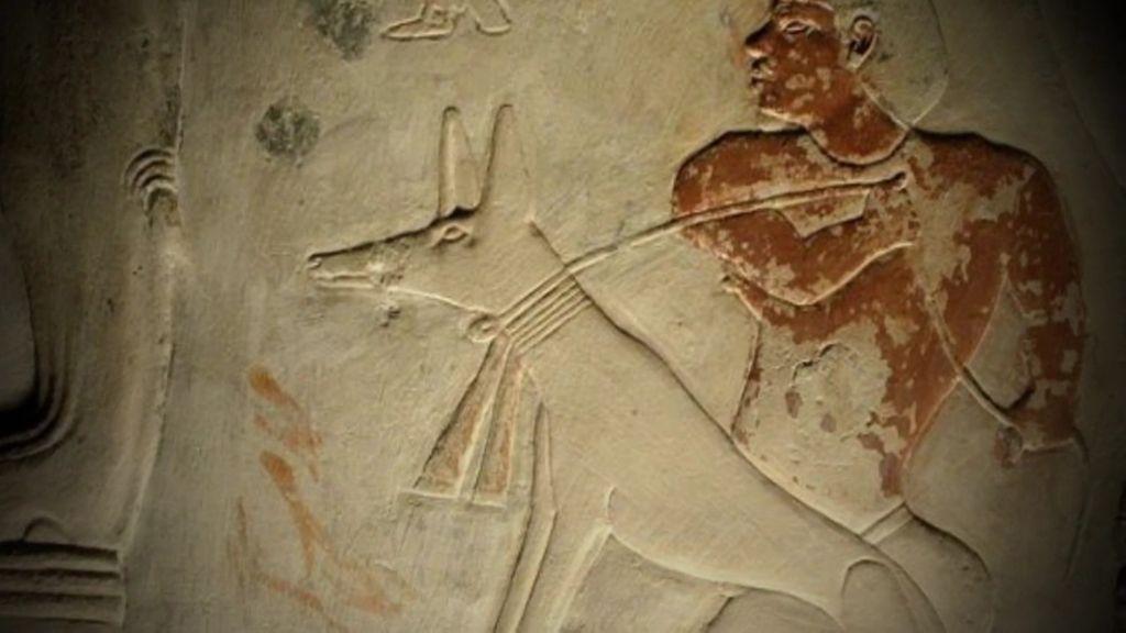 La aplicación de animales en medicina se remonta hace miles de años