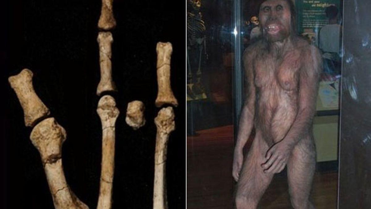 Nuestro ancestro 'Lucy' convivió con otra especie homínida