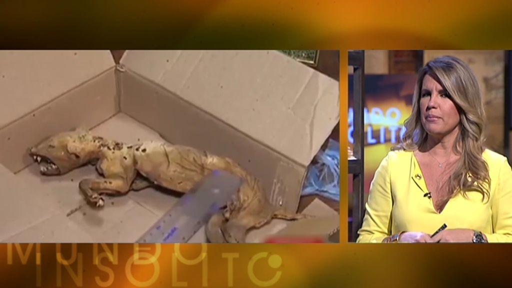 Mundo Insólito: ¿Ha aparecido el verdadero chupacabras en Ucrania?