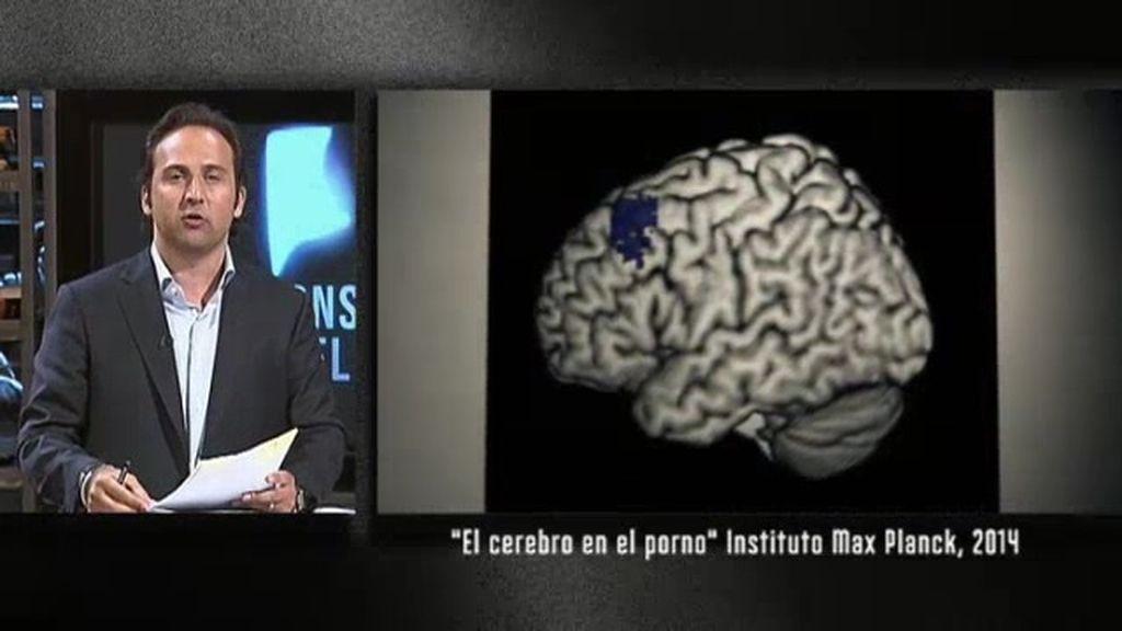 El cerebro en el porno