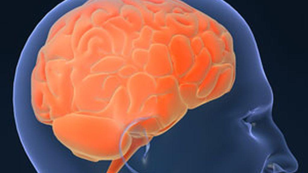 El lóbulo temporal medio del cerebro (MTL) tiene un papel importante en la memoria declarativa. Foto: Gtres