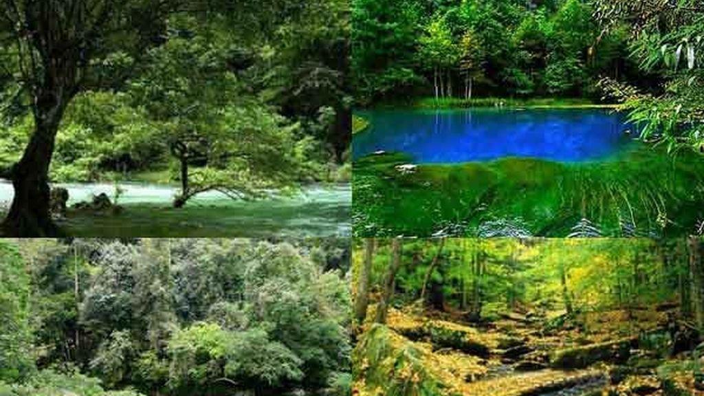 Bosque cárstico de Maolán: Un paisaje fascinante