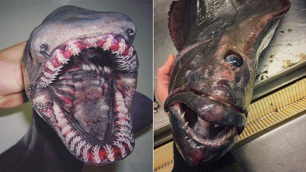 Un pescador ruso comparte las imágenes de las criaturas más terroríficas del mar