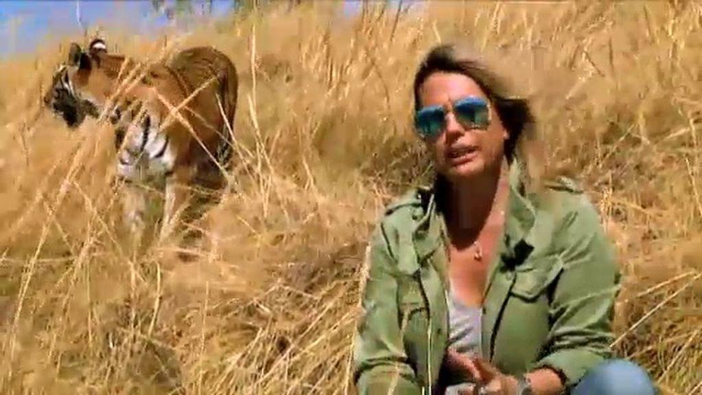 Fauna misteriosa: los misterios del tigre
