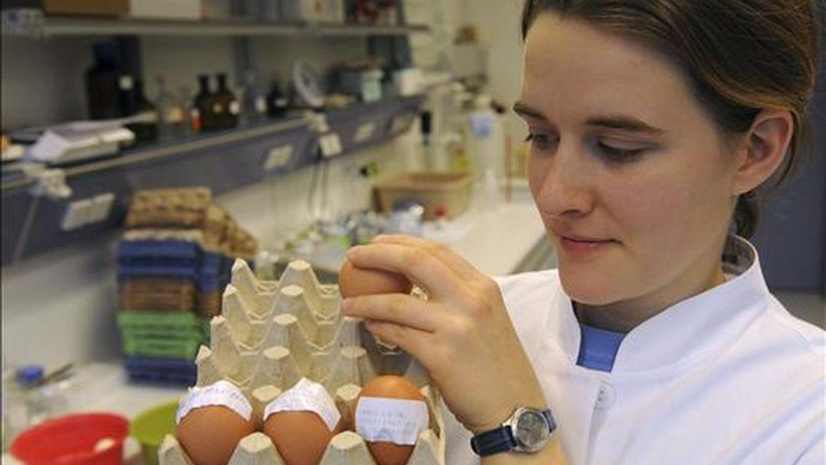 La investigadora Ulrike Behringer comprueba huevos contaminado con dioxina en un labotorio de protección del consumidor, en Oldenburgo, Alemania. EFE