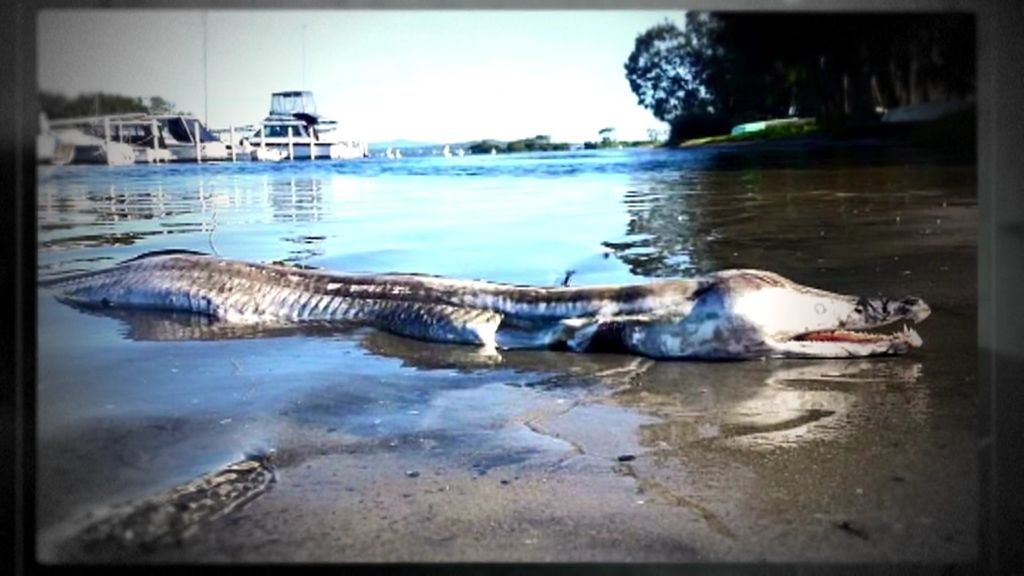 Misterio 4.0: Una foto de un monstruo marino en la costa australiana se hace viral