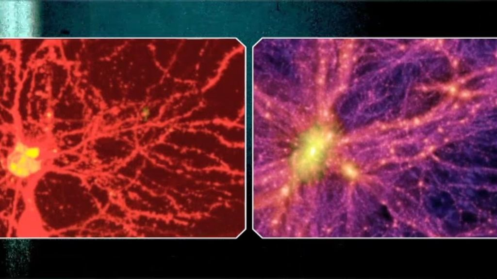 El cerebro en el Universo