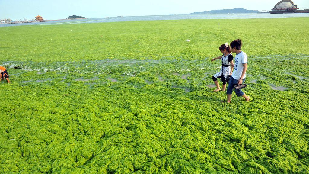 Algas marinas recubren una playa