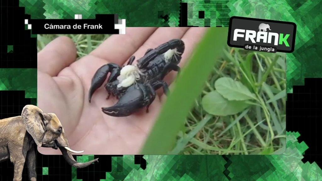 Fran halla en su viaje animales sobrenaturales