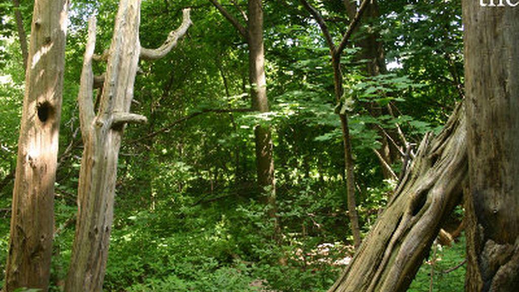 Bosque, foresta, árboles