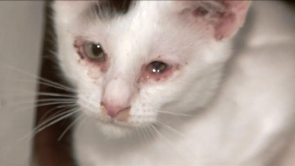 Los gatos de Paquita no presentan condiciones de salud e higiene