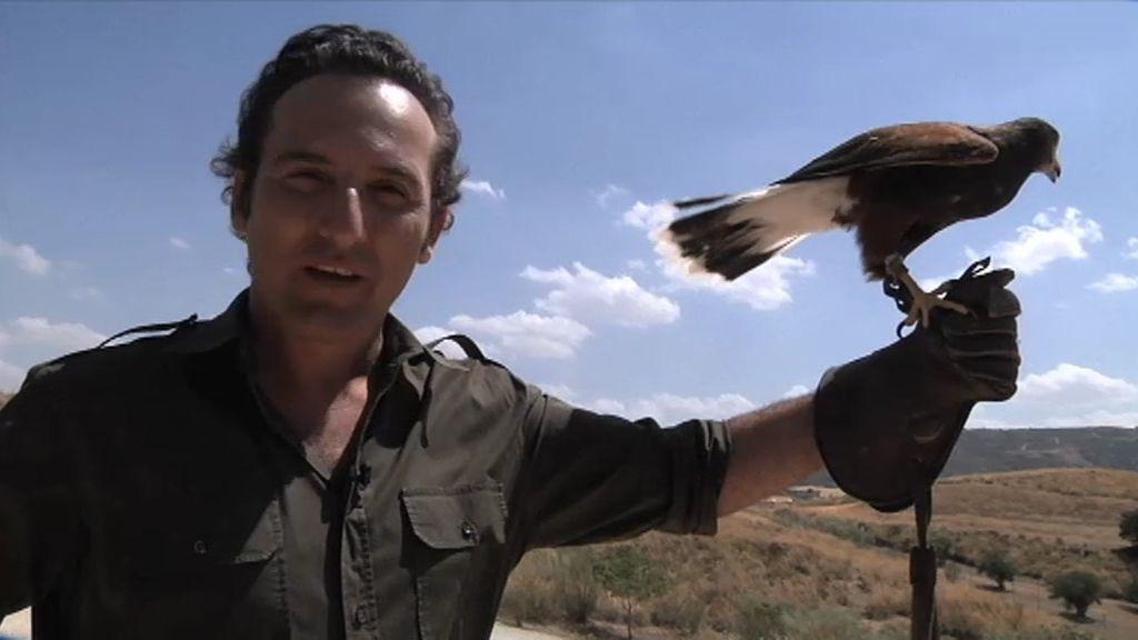 El halcón peregrino: Un vuelo libre que cambió la vida de Félix Rodríguez de la Fuente