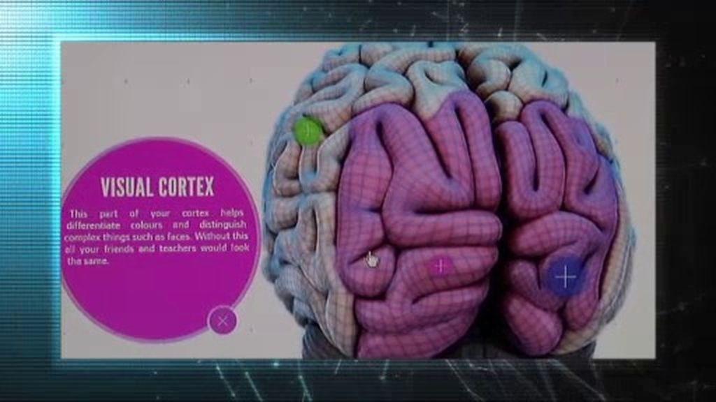 Misterio 4.0: el mapa del cerebro