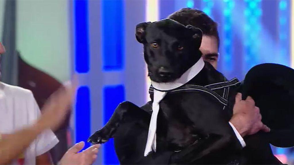 El perro Rocky se convierte en el segundo finalista de '¡Vaya Fauna!'