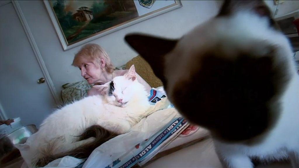 Paquita no puede vivir sin sus 70 gatos