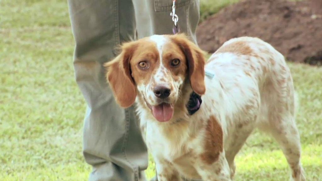 Beatriz de Orleans ya tenía otro perro, que ha sido reeducado por César Millán