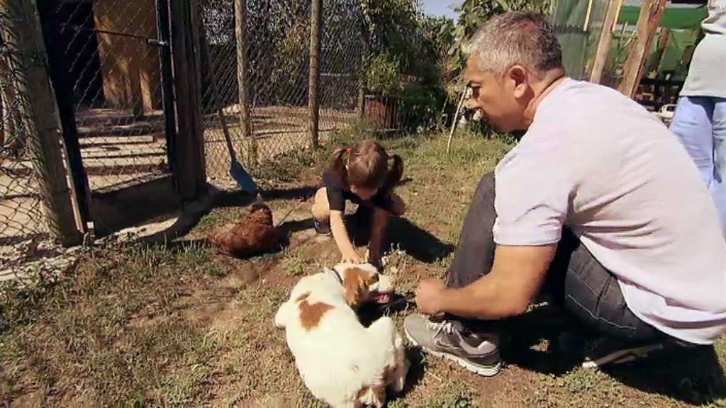 Animales abandonados que encuentran una mano amiga