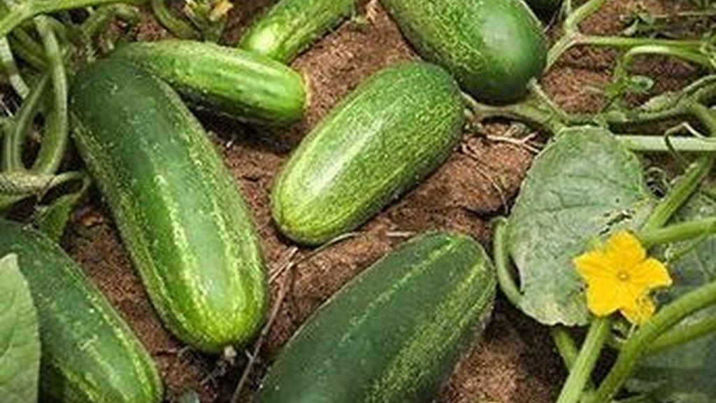 Cadenas de distribución españolas y alemanas se han ofrecido a trabajar conjuntamente con los productores y exportadores de frutas y hortalizas en la normalización de los mercados hortícolas.