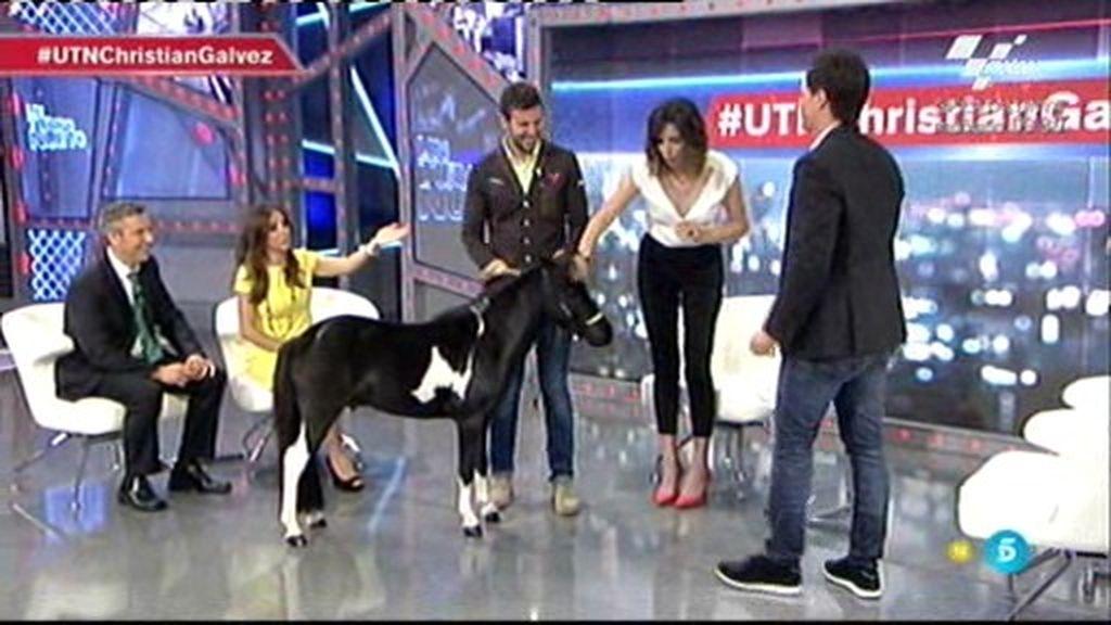 Sorpresón para Christian Gálvez en el plató de 'UTN'… ¡un poni!