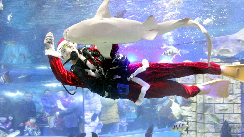 Papá Noel nadando entre tiburones en China