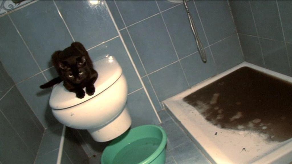Los gatos de Paquita orinan en la ducha
