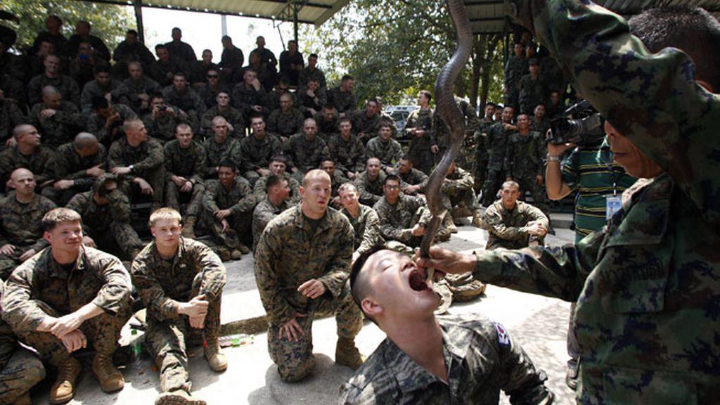 Beber sangre de cobra como entrenamiento militar de supervivencia