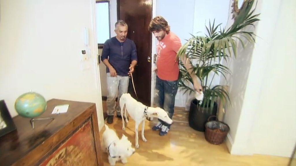 Daniela convivirá un tiempo con Woody, el perrito de Fernando Tejero