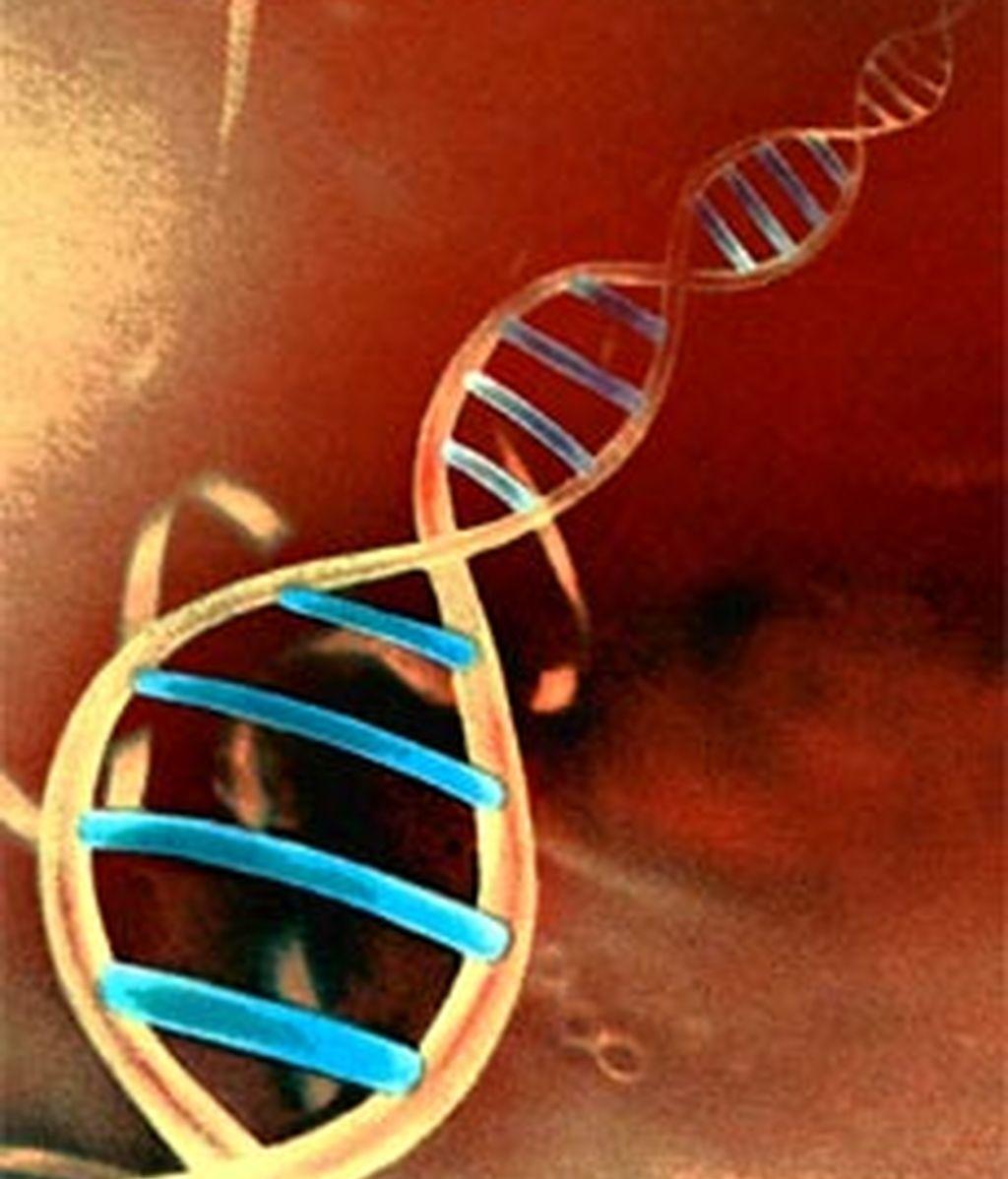 El 80% del genoma humano es biológicamente activo