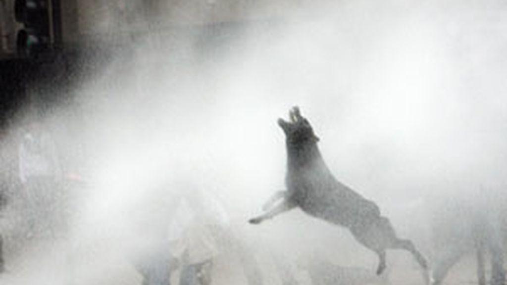 Los carabineros fueron contra todo lo que encontraron a su paso incluído este perro FOTO: REUTERS