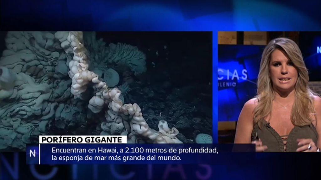 Noticias: La esponja de mar más grande del mundo, la invasión de murciélagos…