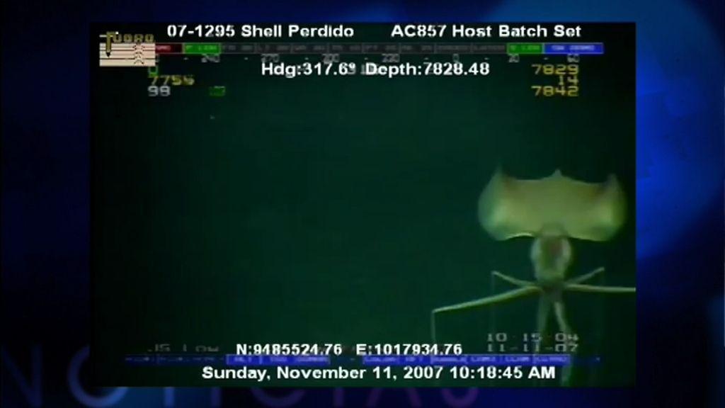 El calamar alienígena o la cápsula anti tsunamis… noticias de la semana