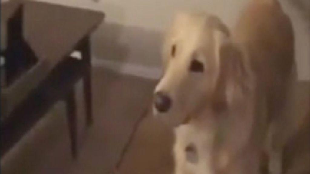Una perra cumple su sueño: su dueño se disfraza de su juguete favorito