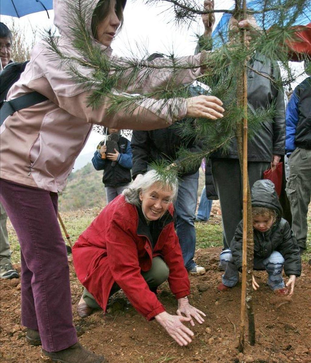 La etóloga británica Jane Goodall (agachada-c), durante una plantación de árboles para reforestar una zona de la sierra de Collserola (Barcelona). EFE/Archivo