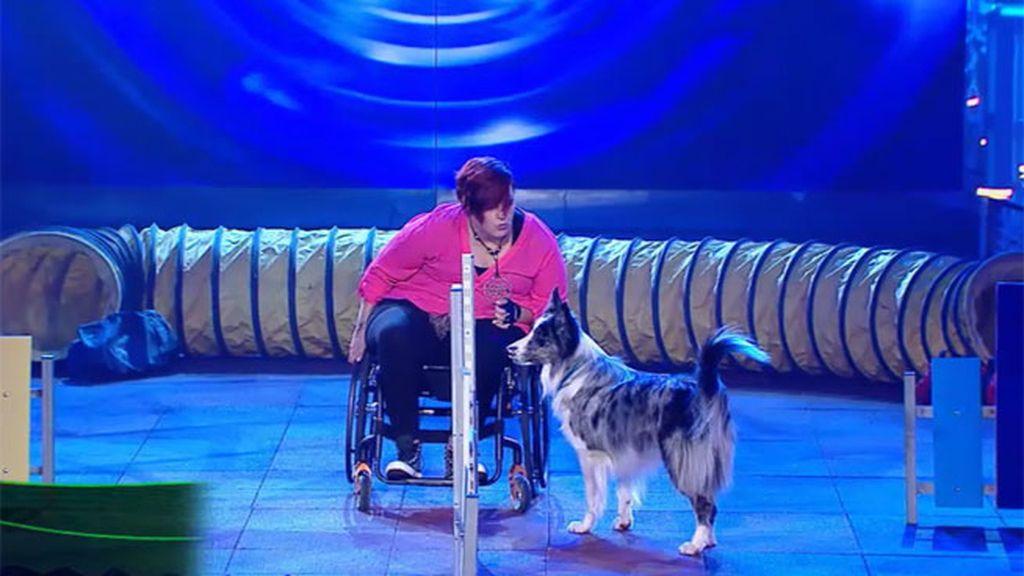 Cristophito, el perro de Belén que practica 'agility' por órdenes