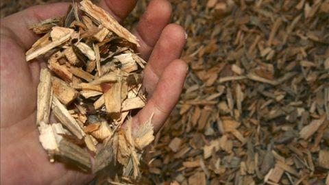 Resultado de imagen de biomasa forestal