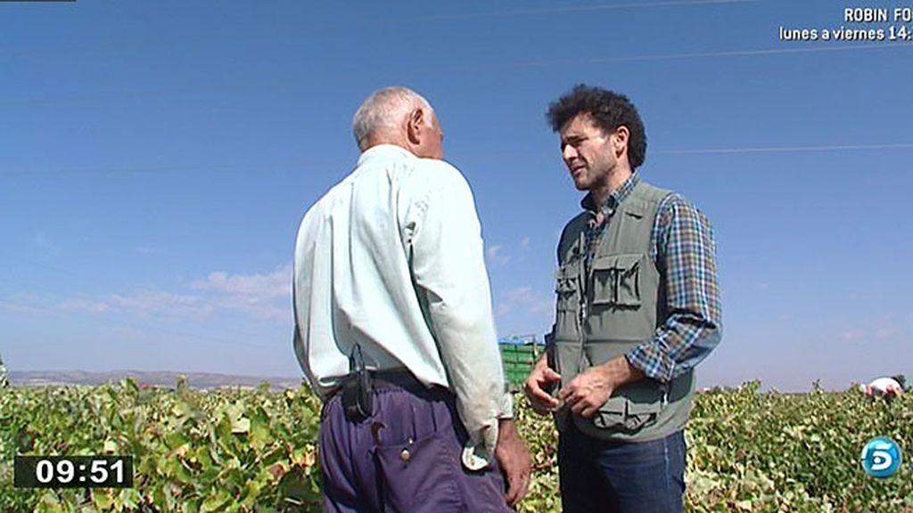 La vendimia da trabajo a cientos de personas en La Mancha durante un mes