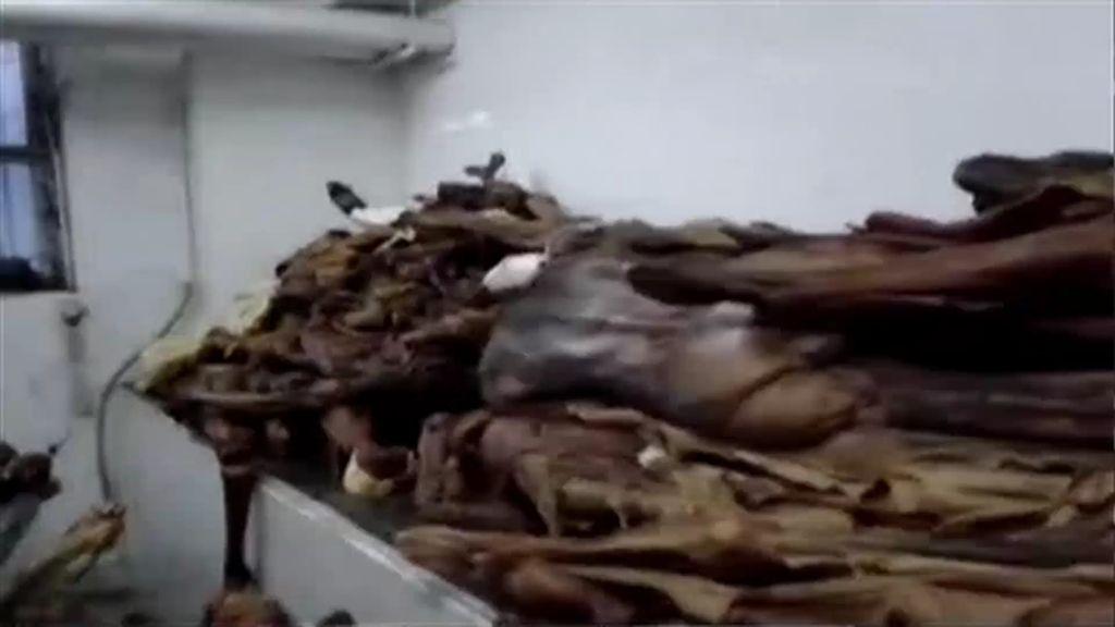 Las irregularidades en la acumulación de cadáveres en la Complutense