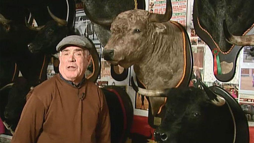 Vendo: Cabezas de toro disecadas para tu pared, desde 1000 euros