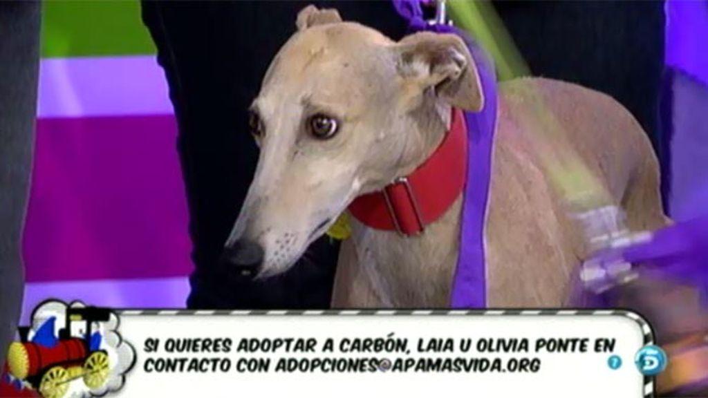 La Asociación Más Vida anima a los espectadores a adoptar animales