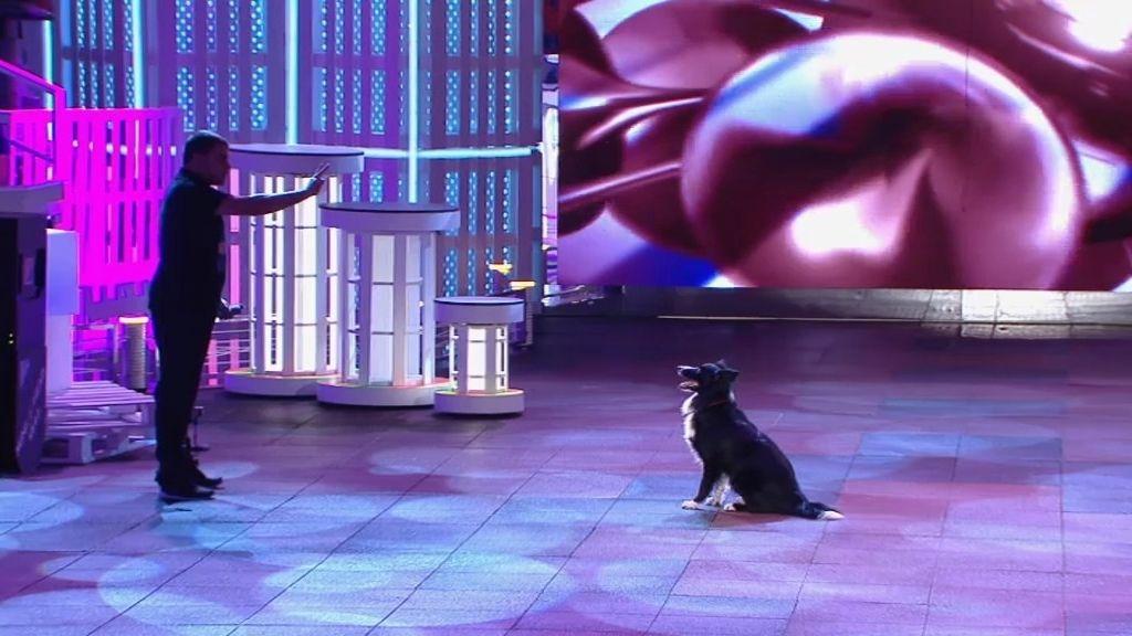 Eliot, un perro terapéutico para Álex