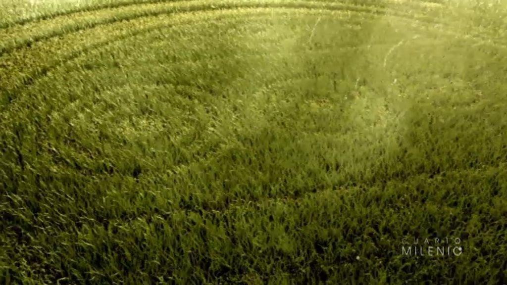 Los círculos de las cosechas, las claves