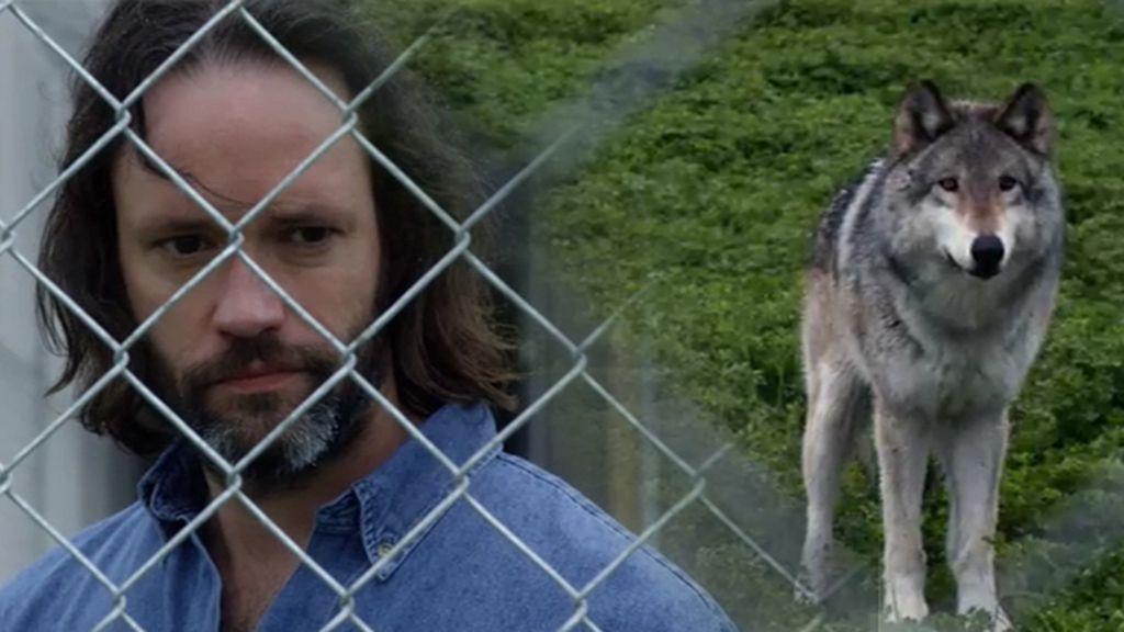 Una manada de lobos provoca el caos en una prisión de máxima seguridad