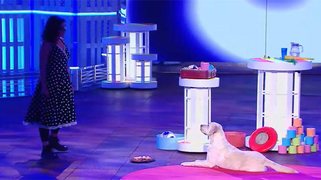 Tito, el perro que consigue resistirse a un sabroso y tentador plato de jamón