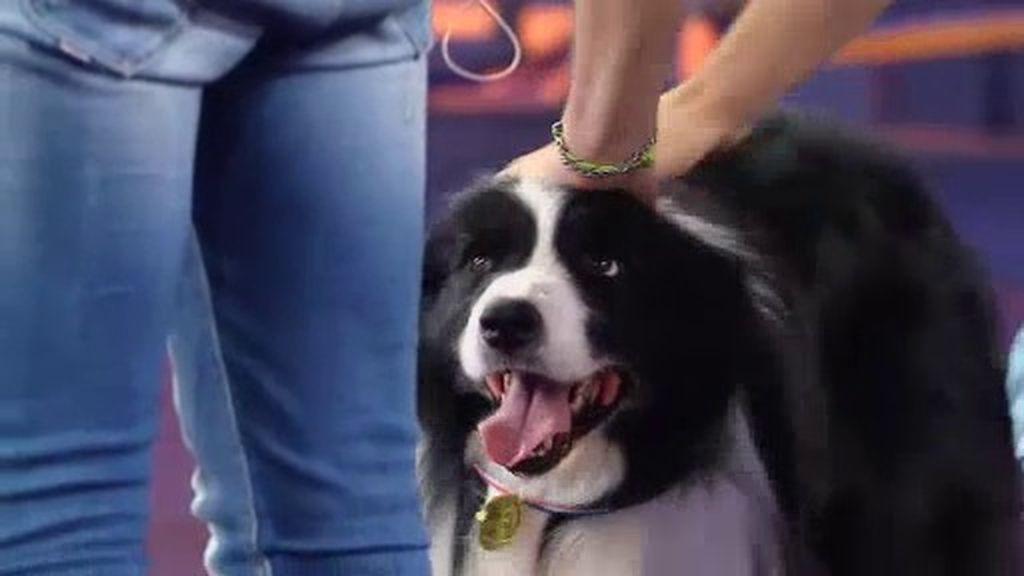 Jack, un perro mágico