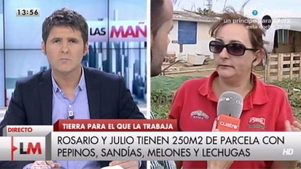 Familias y parados de Sevilla cultivan tierras sin propietario para subsistir