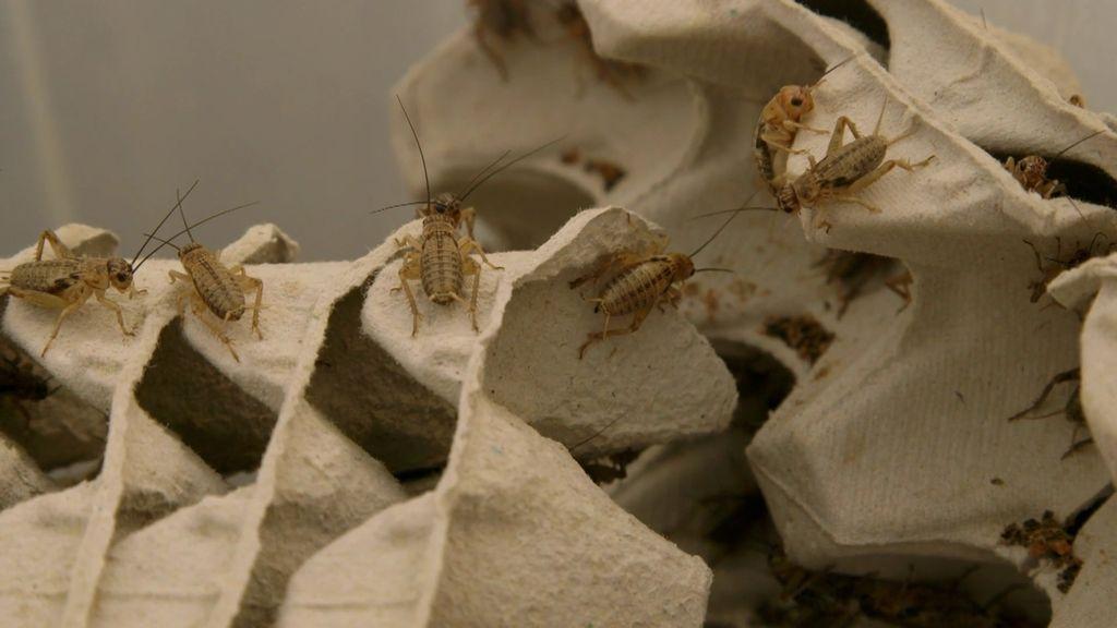 Nacho Medina visita una granja donde se crían insectos para el consumo humano