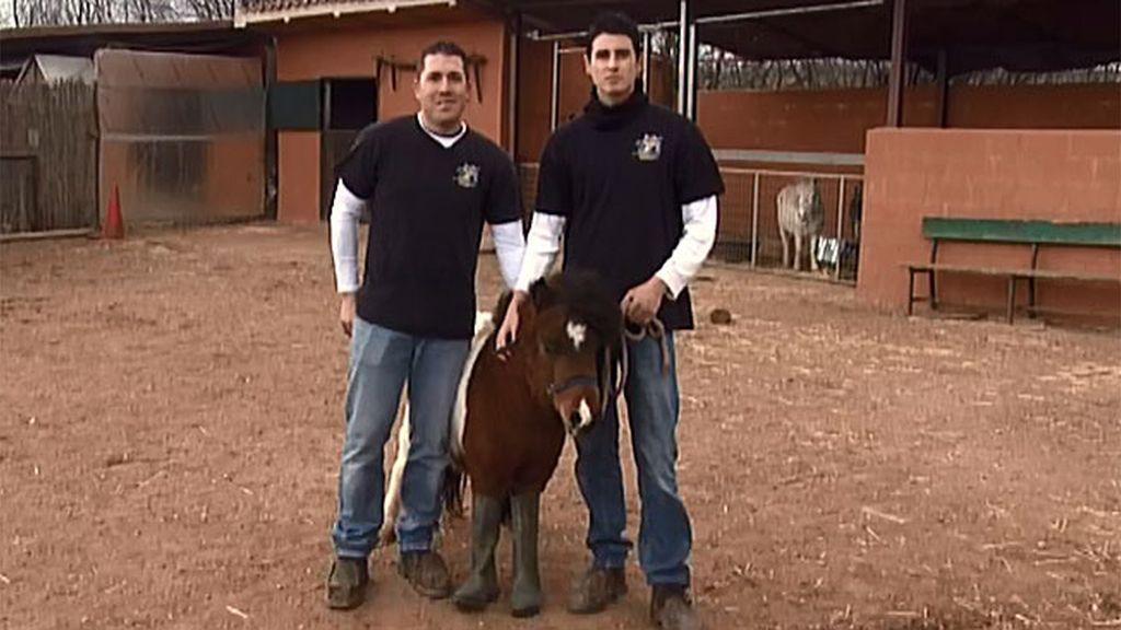 Si necesitas herrar tu caballo...