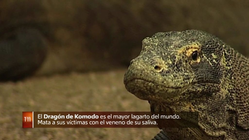 """Fernando González: """"Parte del origen real de los dragones es de animales que existen"""""""
