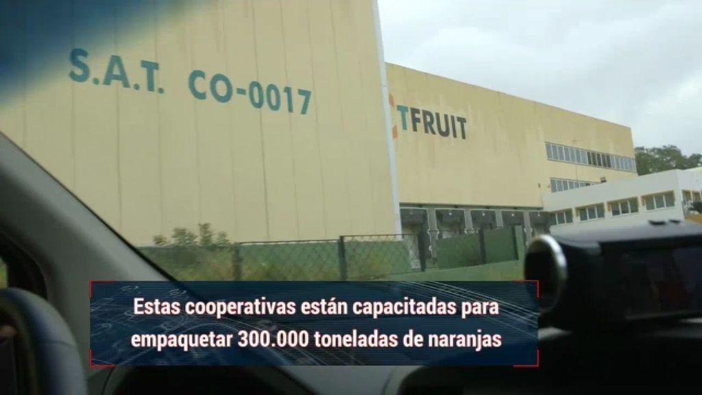 Dos de las ocho cooperativas de Palma del Río han cerrado en plena temporada