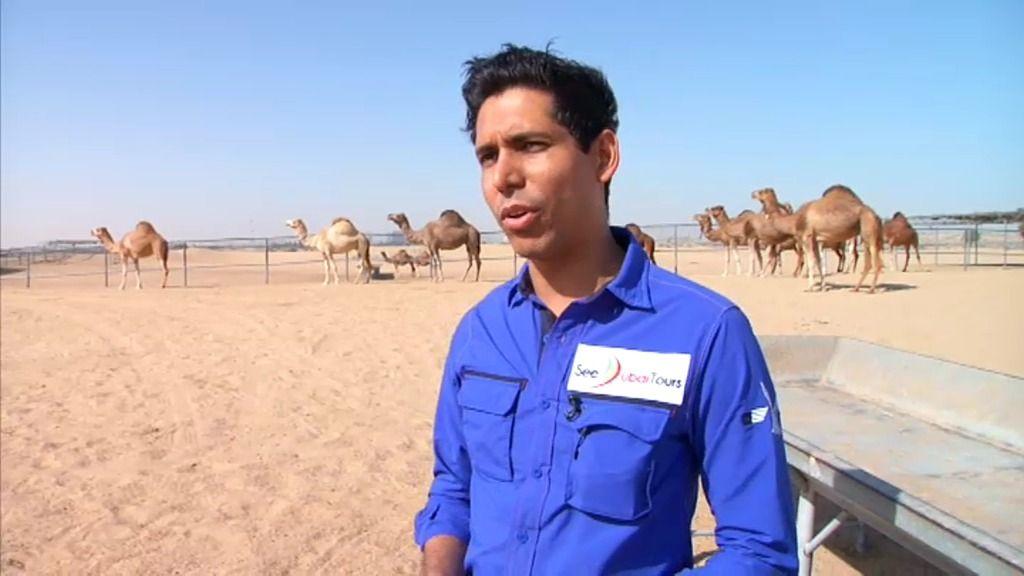 Según los médicos, la leche de camello es curativa y previene muchas enfermedades